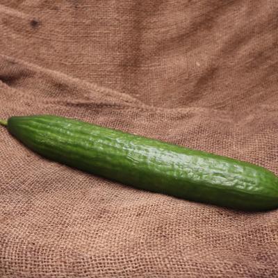 Concombre long FRA