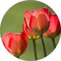 Image de la categorie Fleurs de Laurent Primeurs