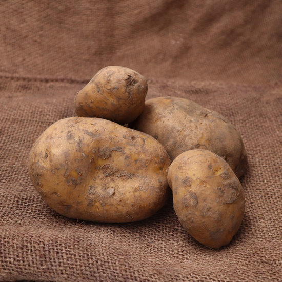 Pomme de terre spécial frite FRA