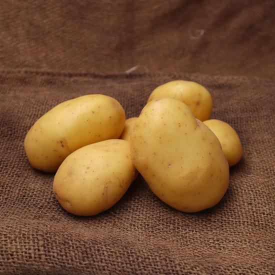Pomme de terre Agata FRA
