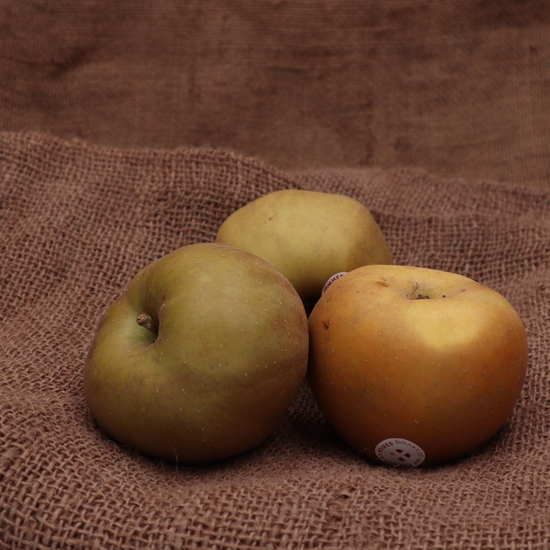 Pomme canada grise FRA