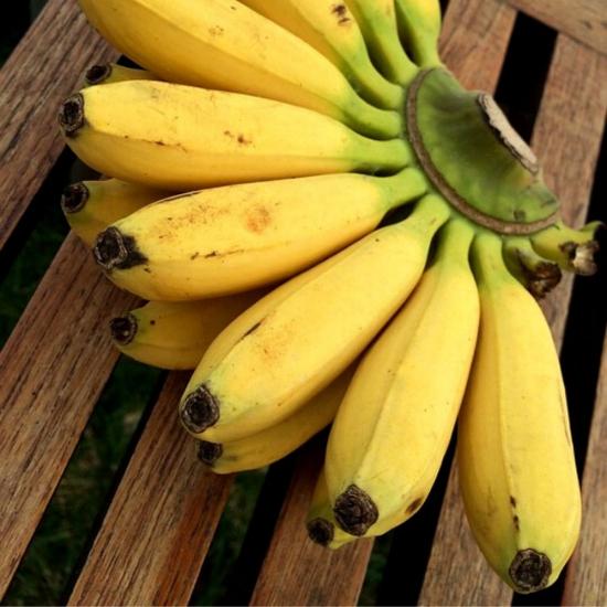 Bananitos COL